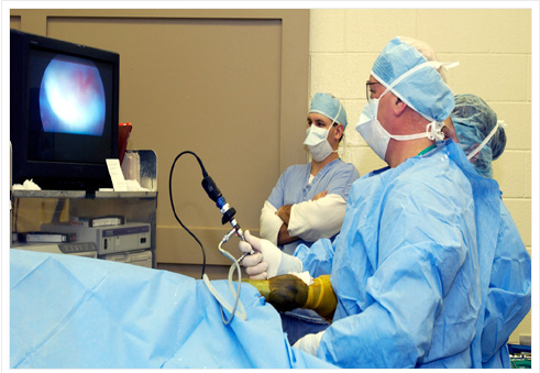 Hip & Knee Replacement Surgery